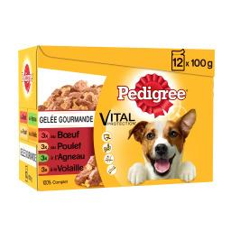 Gelée gourmande pour chiens adultes