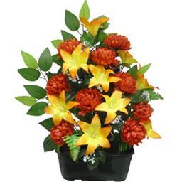 Lys chrysanthème en jardinière