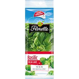 Florette Basilic