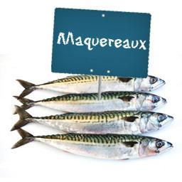 Maquereau (poisson entier)
