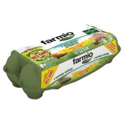 Jaja z wolnego wybiegu od kur karmionych paszą z soją bez GMO M 10 sztuk