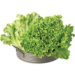 Alface Salanova Verde